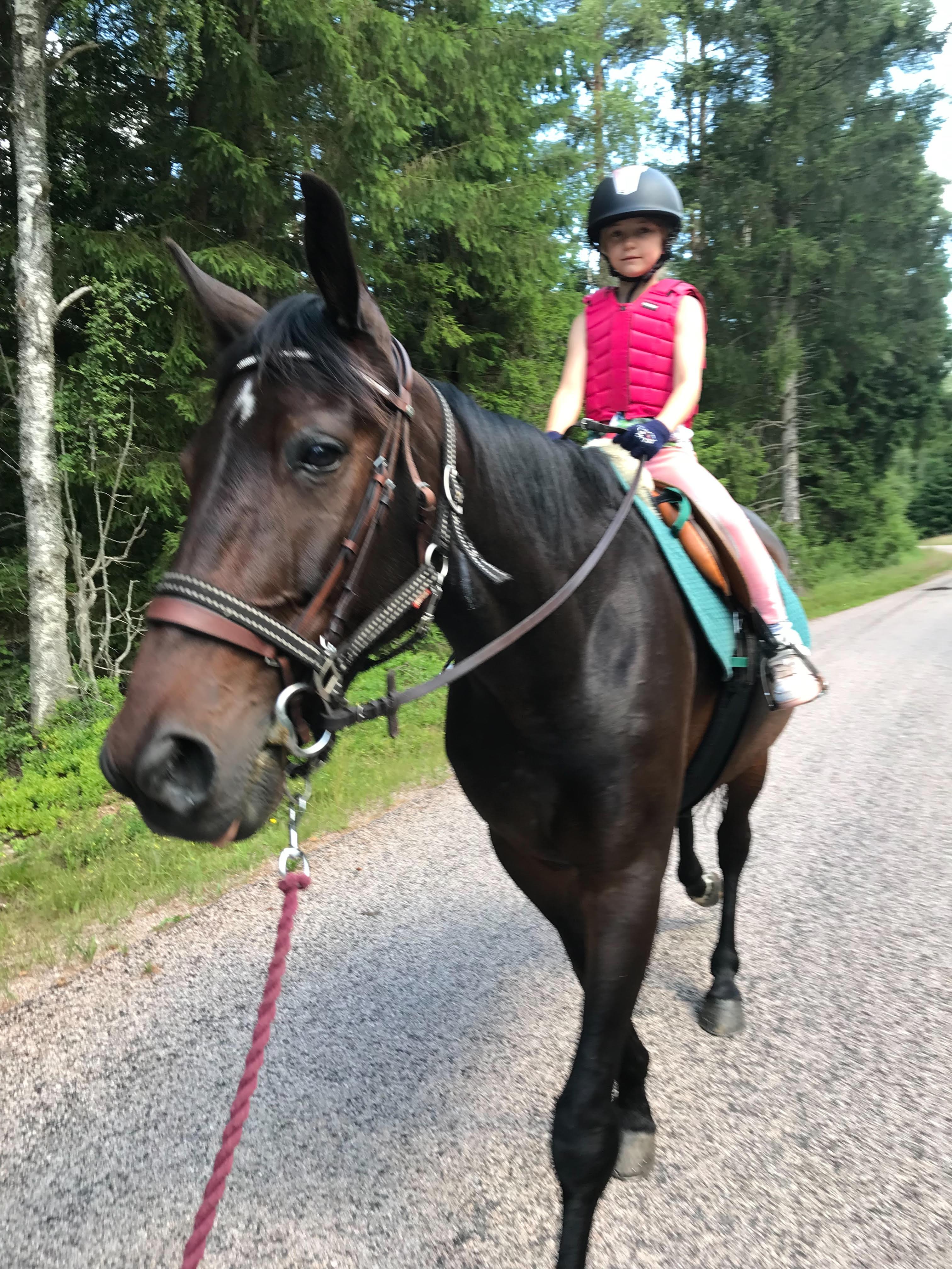 Astrid Karlsson som rider på Quantum Amos varmblodstravare